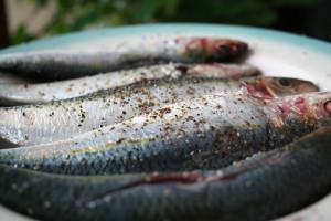 sardinep